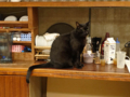 Cats of Minimal Cafe, #0503