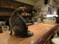 Cats of Minimal Cafe, #0511