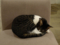 Cats of Minimal Cafe, #0519
