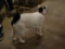 Cats of Minimal Cafe, #0522