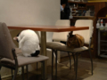 Cats of Minimal Cafe, #0523