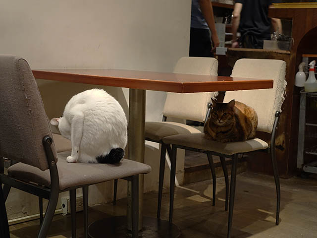 Cats of Minimal Cafe, #0524