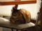 Cats of Minimal Cafe, #0525