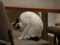 Cats of Minimal Cafe, #0527