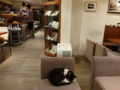 Cats of Minimal Cafe, #0528
