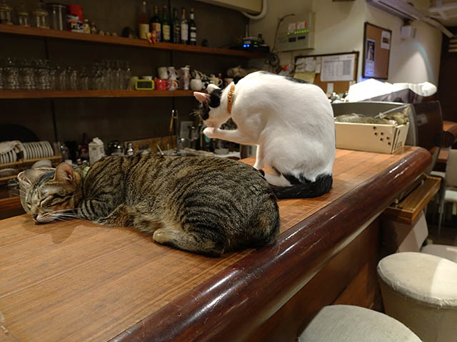 Cats of Minimal Cafe, #0534