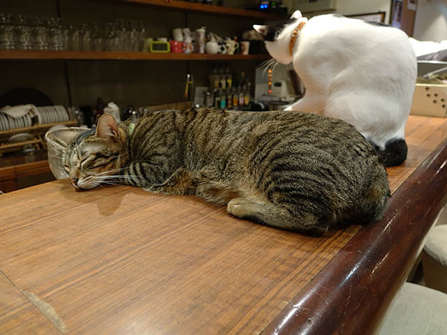 Cats of Minimal Cafe, #0535