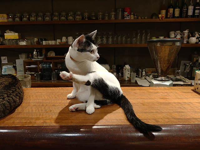 Cats of Minimal Cafe, #0540