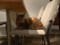 Cats of Minimal Cafe, #0547