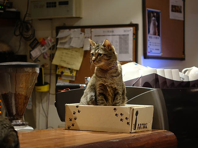Cats of Minimal Cafe, #0555