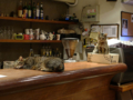 Cats of Minimal Cafe, #0557