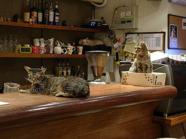 Cats of Minimal Cafe, #0558