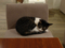 Cats of Minimal Cafe, #0559