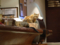 Cats of Minimal Cafe, #0562