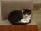 Cats of Minimal Cafe, #0564