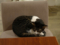 Cats of Minimal Cafe, #0565
