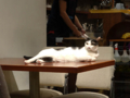 Cats of Minimal Cafe, #0584