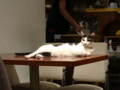 Cats of Minimal Cafe, #0585