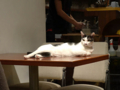 Cats of Minimal Cafe, #0586