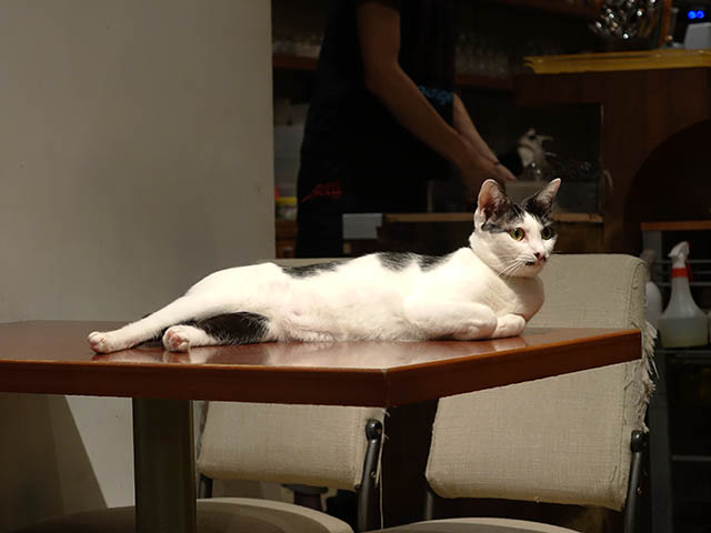 Cats of Minimal Cafe, #0587