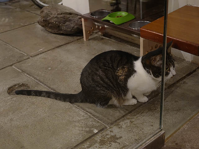 Cats of Minimal Cafe, #0599