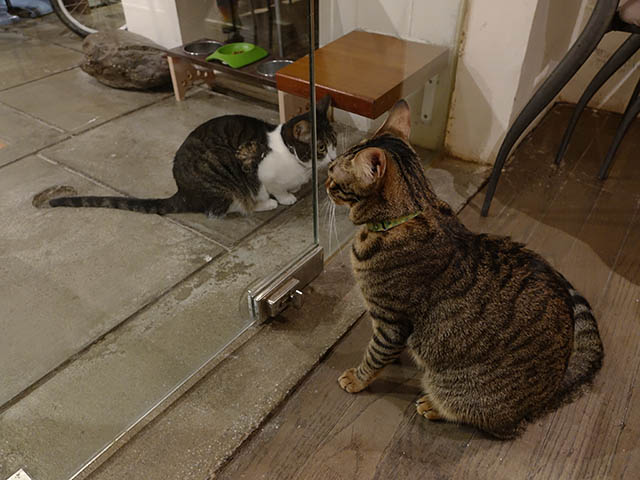 Cats of Minimal Cafe, #0600