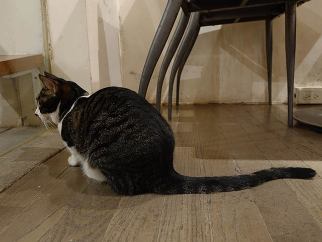 Cats of Minimal Cafe, #0605