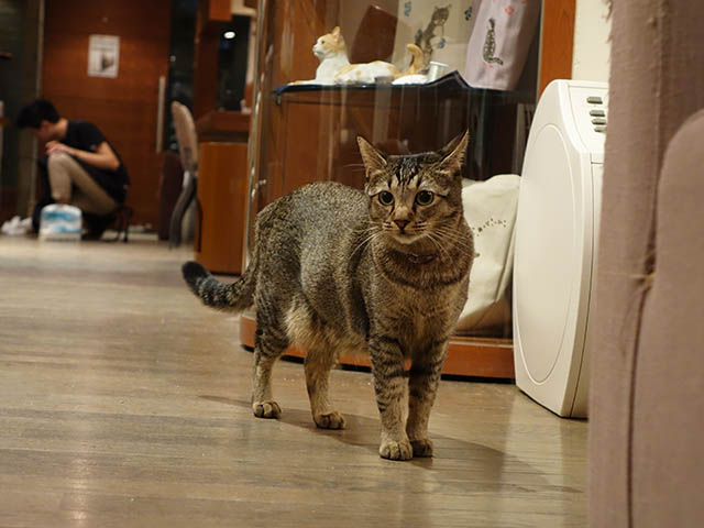 Cats of Minimal Cafe, #0606