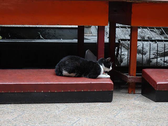 Cats of Yi Tien Palace, #0613