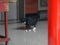 Cats of Yi Tien Palace, #0622