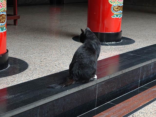 Cats of Yi Tien Palace, #0625