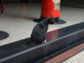 Cats of Yi Tien Palace, #0626