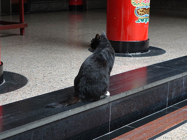 Cats of Yi Tien Palace, #0627