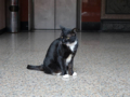 Cats of Yi Tien Palace, #0628