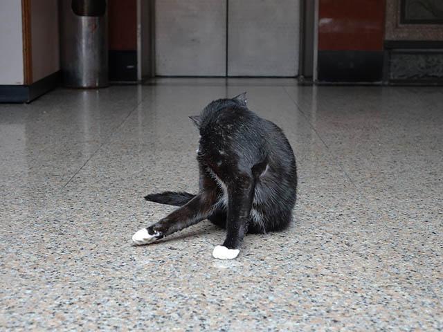 Cats of Yi Tien Palace, #0629