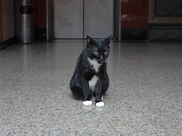 Cats of Yi Tien Palace, #0631
