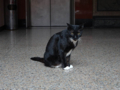 Cats of Yi Tien Palace, #0632