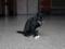 Cats of Yi Tien Palace, #0632