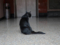 Cats of Yi Tien Palace, #0633
