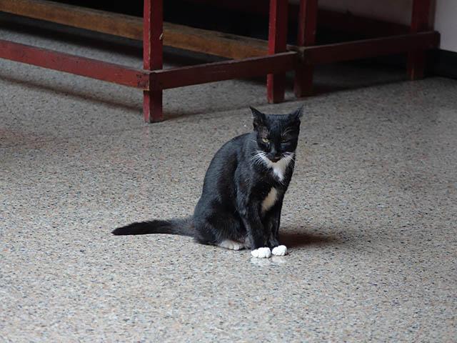 Cats of Yi Tien Palace, #0635