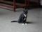 Cats of Yi Tien Palace, #0636