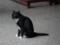 Cats of Yi Tien Palace, #0637