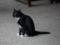 Cats of Yi Tien Palace, #0638