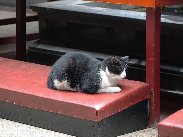 Cats of Yi Tien Palace, #0640