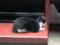 Cats of Yi Tien Palace, #0641
