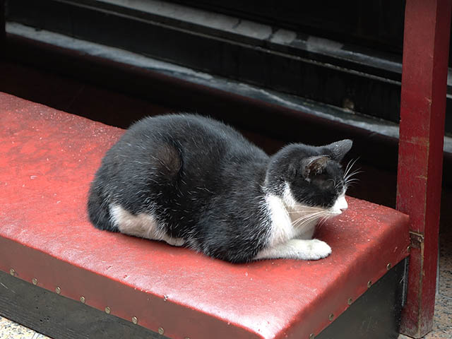 Cats of Yi Tien Palace, #0642