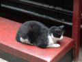 Cats of Yi Tien Palace, #0642
