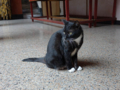 Cats of Yi Tien Palace, #0643