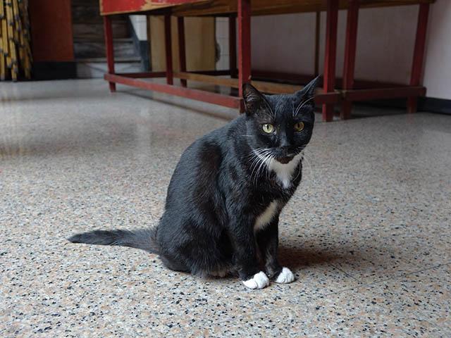 Cats of Yi Tien Palace, #0644