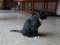 Cats of Yi Tien Palace, #0645